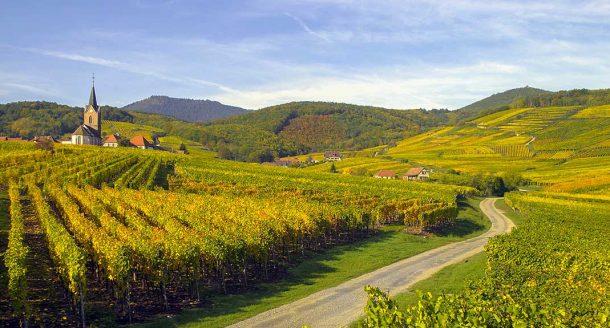 Top 5 : les plus belles routes des vins de France