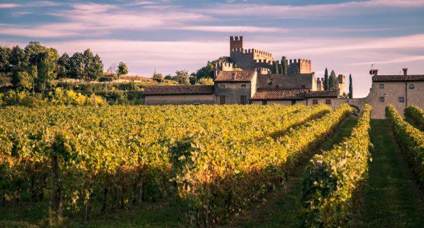 Cours d'œnologie : et si vous optiez pour une expérience en plein cœur des vignobles ?