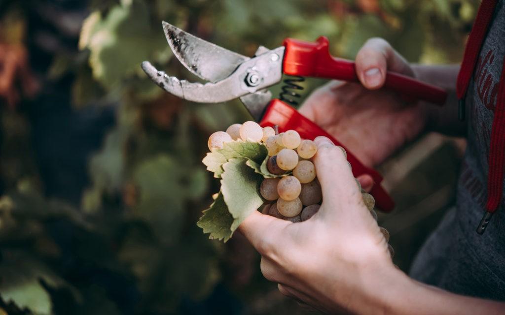 Fabrication de vin Orange