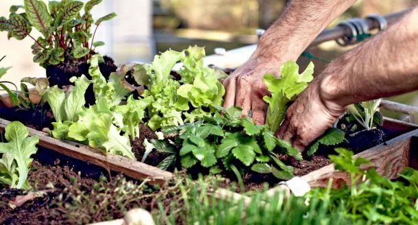Les meilleures plantes à faire pousser sur un balcon pour se régaler en cuisine