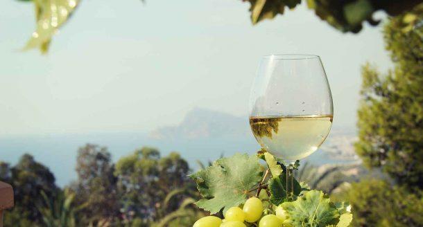 Zoom sur les plus grandes régions viticoles de France